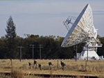 Kangaroos and an ATCA antenna