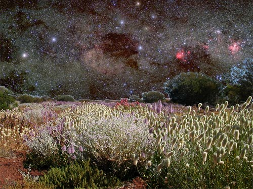 Wildflowers in the Sky